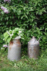Zink-kannor trädgård
