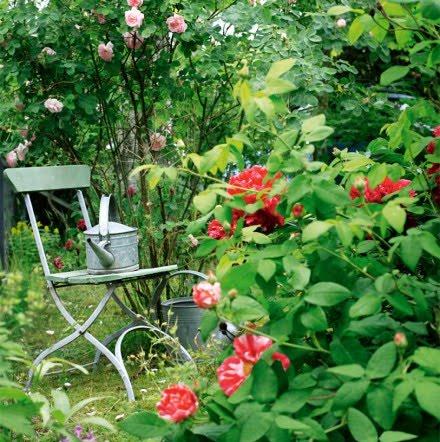 Trädgård i lantlig stil